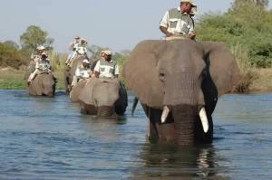 Victoria Falls, Chobe National Park & Moremi Game Reserve Tour Packages