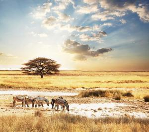 Makgadikgadi Pans National Park Tour, Maun, Moremi Game Reserve-okavango Delta & Chobe National Park Packages